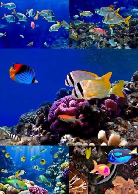 Tropical fish - UHQ Stock Photo