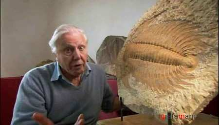 ������ ����� � ������� ��������� (2 ����� �� 2) / First Life with David Attenborough (2010) DVDRip
