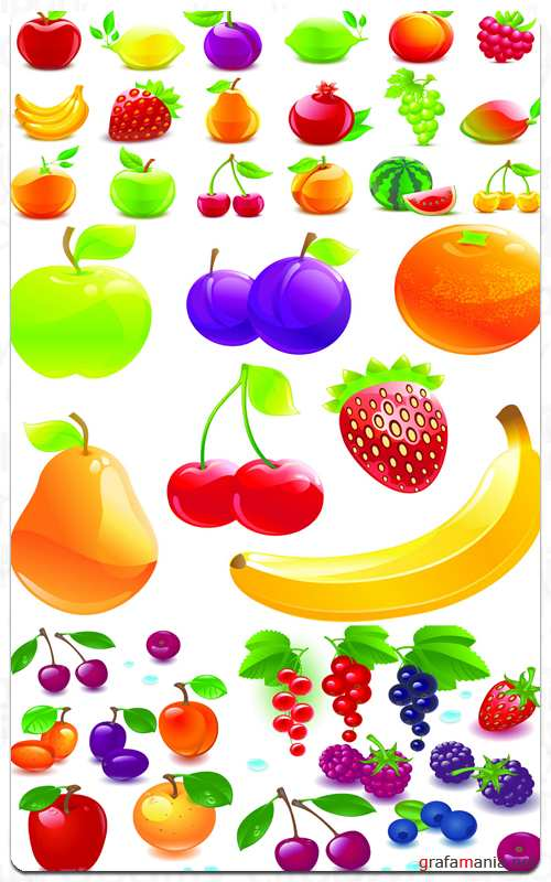 Fruit Basket - Vector Stock