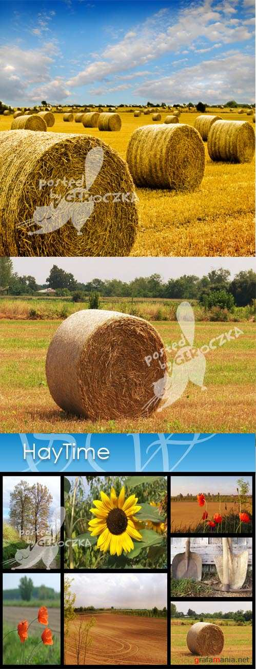 Hay time3