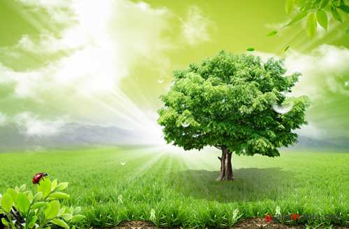 Sources - A large green tree