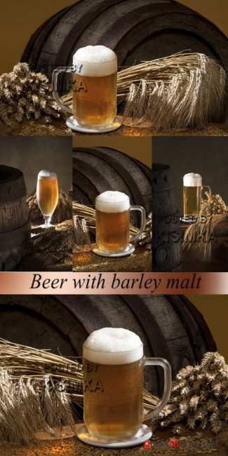 Stock Photo: Beer with barley malt