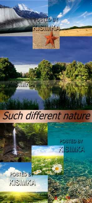 Stock Photo: Such different nature