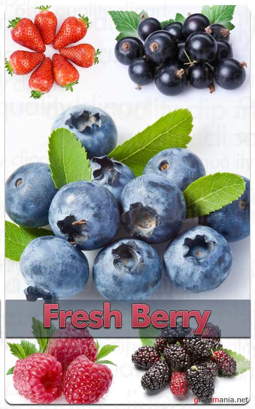 Fresh Berry - Stock Photo Professional