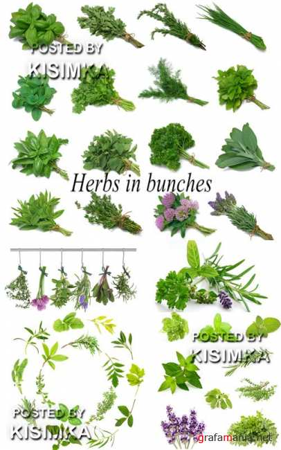 Stock Photo: Herbs in bunches
