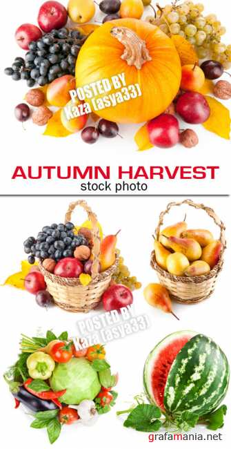 Autumn harvest 4