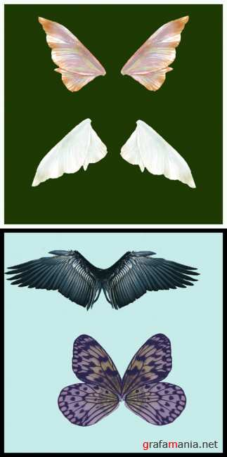 Butterfly wings pack # 1