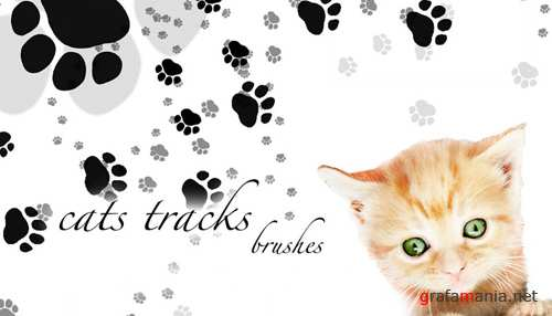 Cats tracks brushes