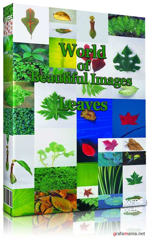 World of Beautiful Images - Leaves Collection