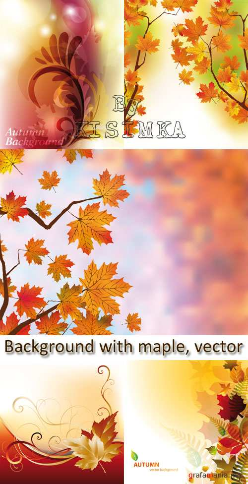 Stock: Autumn background with maple, vector