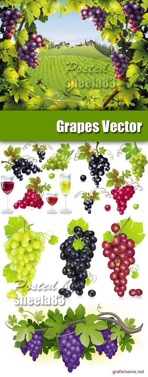 Red, White & Black Grapes Vector