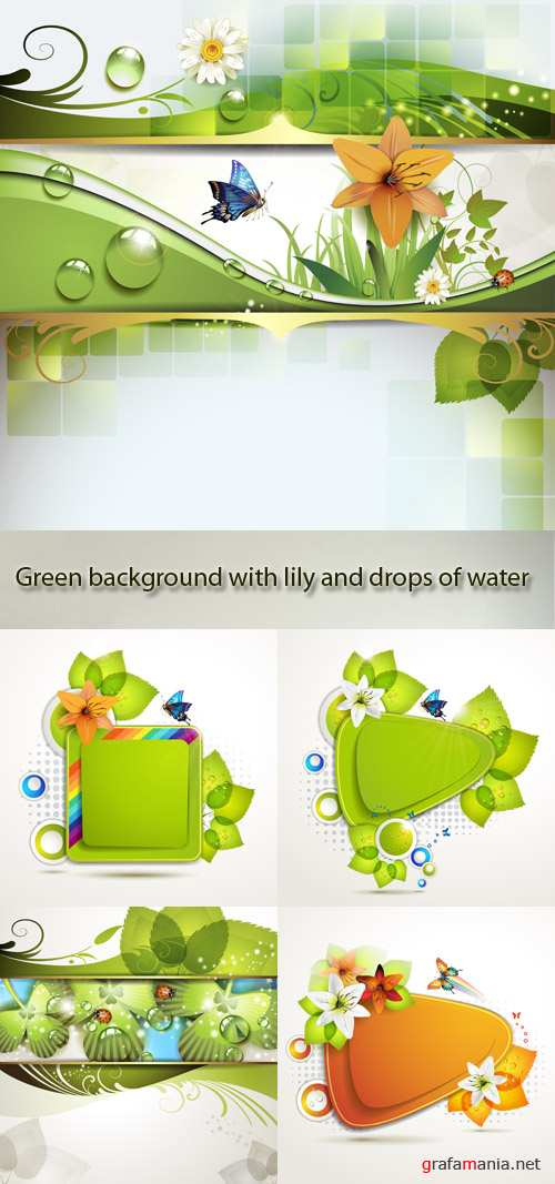 Stock: Green background with lily and drops of water