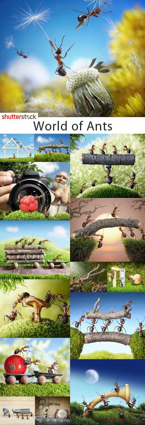 World of Ants - 25 HQ Stock Images