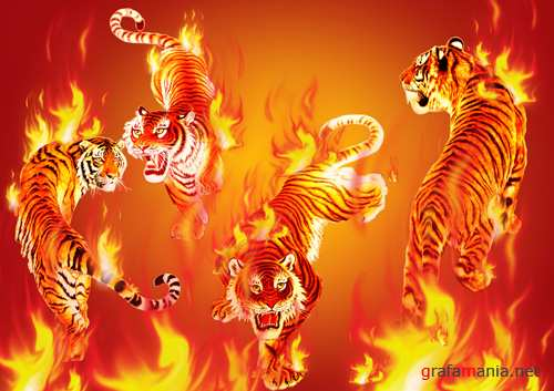 Sources - Fiery-red tiger