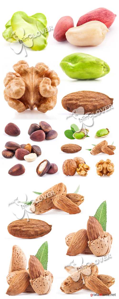 Collection of various nuts 0273