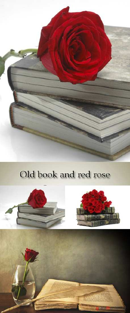 Stock Photo: Old book and red rose