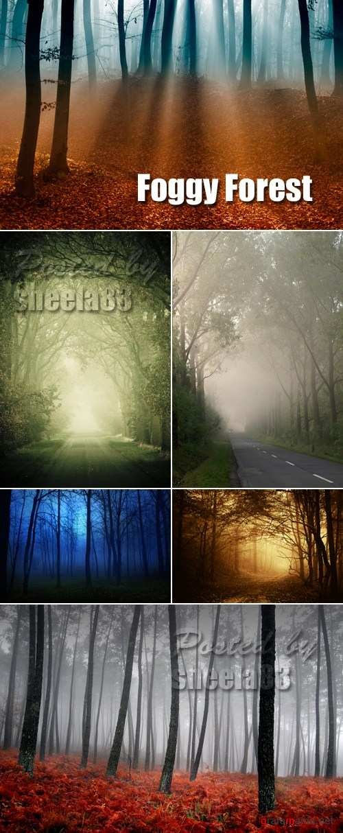 Stock Photo - Foggy Forest