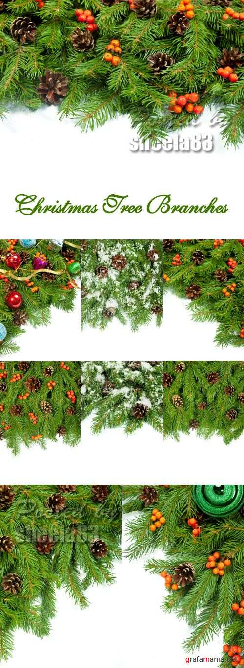 Stock Photo - Christmas Tree Branches 2