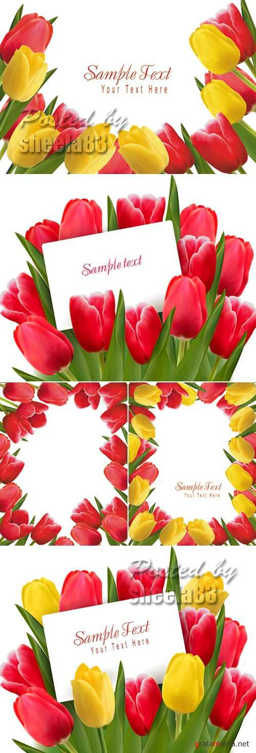 Color Tulips Cards Vector