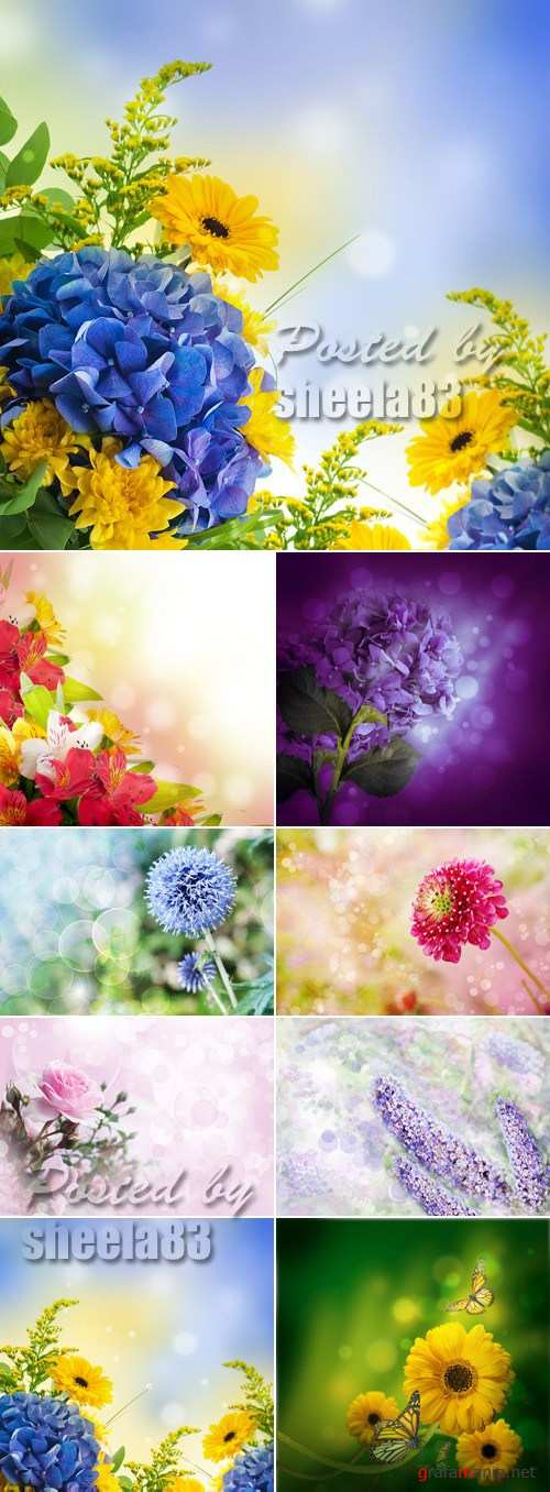 Stock Photo - Flowers Cards Collection