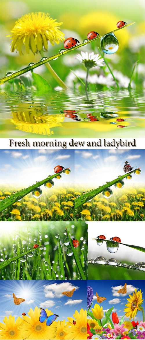 Stock Photo: Fresh morning dew and ladybird