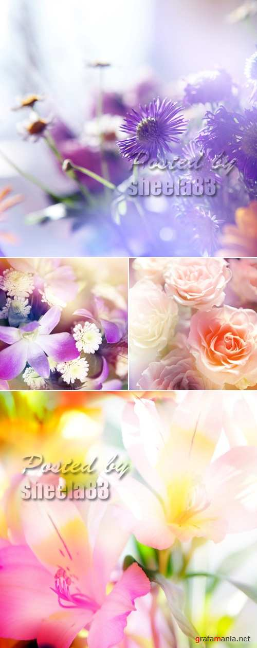 Stock Photo - Color Abstract Flowers