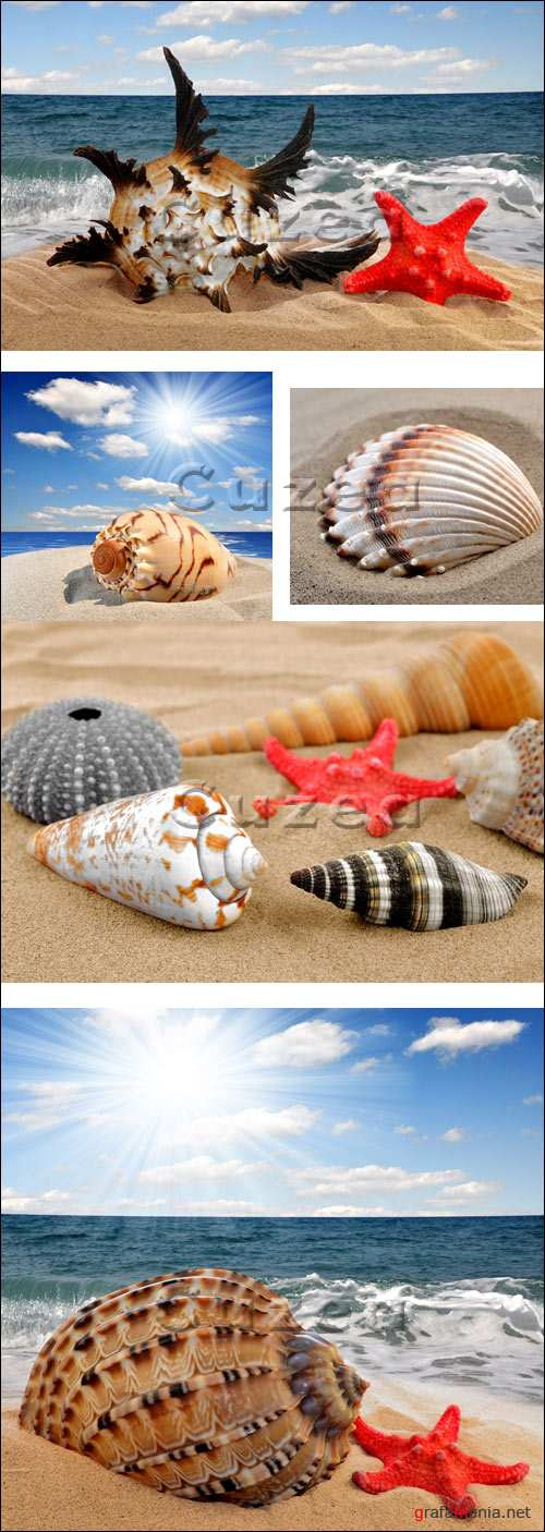 Ракушки на побережье/ Cockleshells on the summer coast - Stock photo