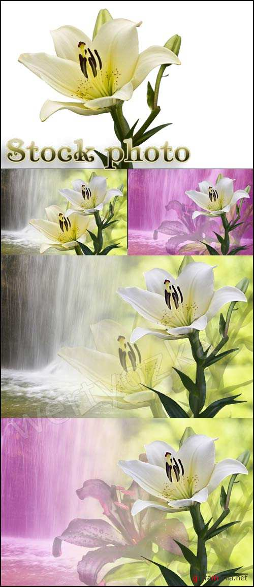 Лилии на фоне водопада / Lily on the background of a waterfall - Raster clipart