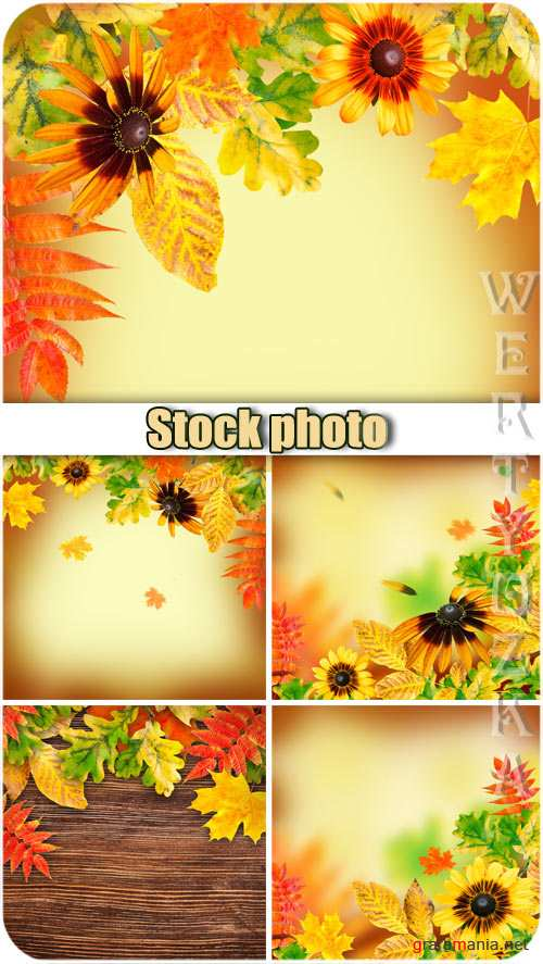 Осенние фоны / Autumn backgrounds, flowers and yellow autumn leaves - Raster clipart