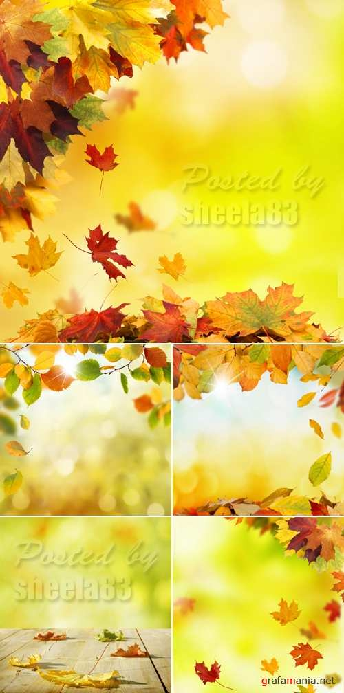 Stock Photo - Autumn Backgrounds with Leaves 2