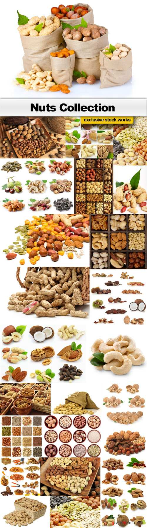 Nuts Collection - 25 JPEG