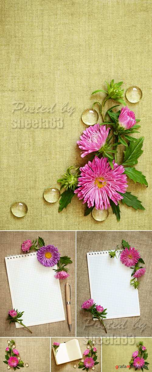 Stock Photo - Asters on Canvas