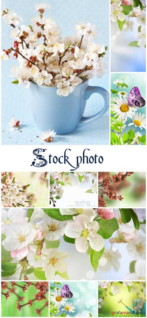 Spring backgrounds with flowers- stock photo