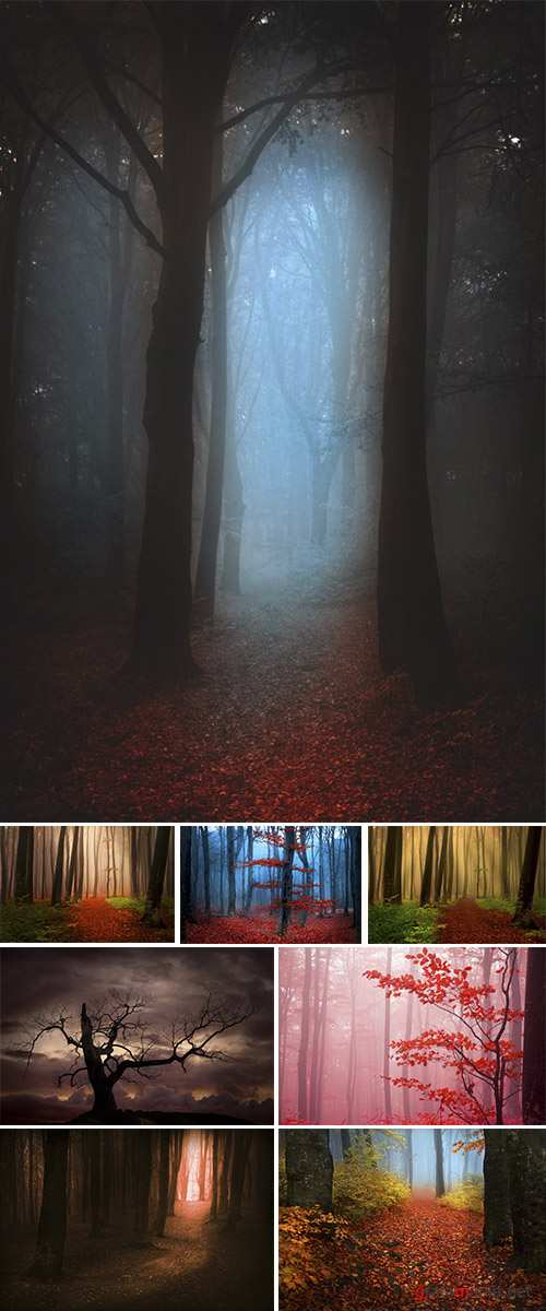 Stock Photo: Mystic forest during a foggy day