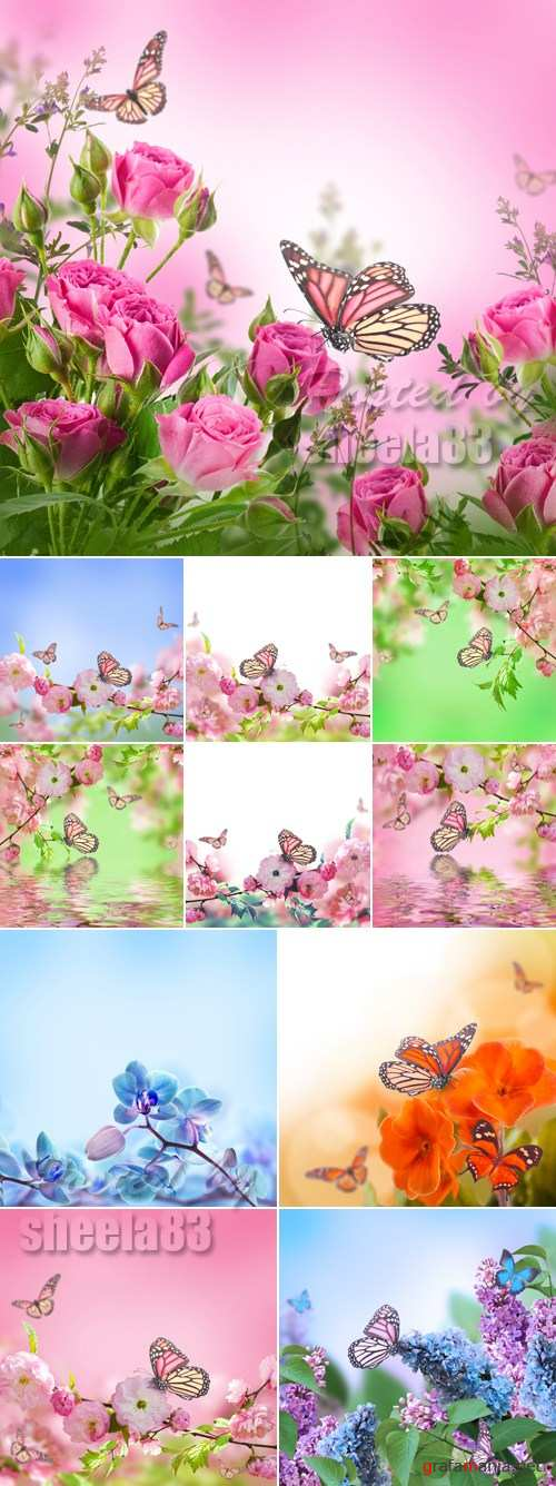 Stock Photo - Beautiful Flowers Cards 5