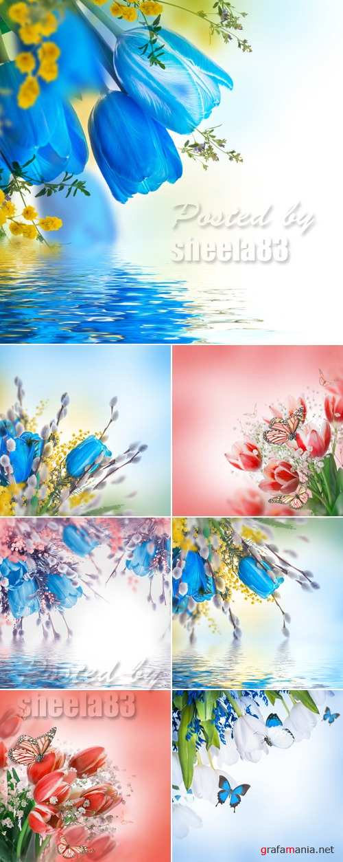 Stock Photo - Tulips Cards