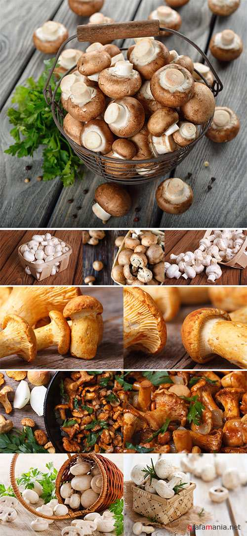 Stock Photo: Mushrooms 3