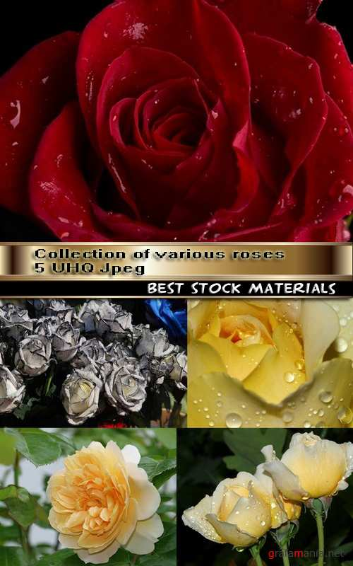 Collection of various roses 5 UHQ Jpeg