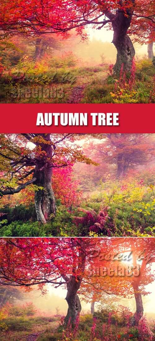 Stock Photo - Autumn Tree