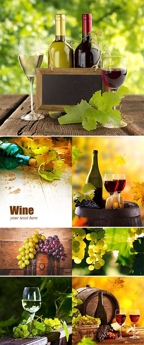 Wine still-life, glass, young vine and bunch of grapes, Stock images