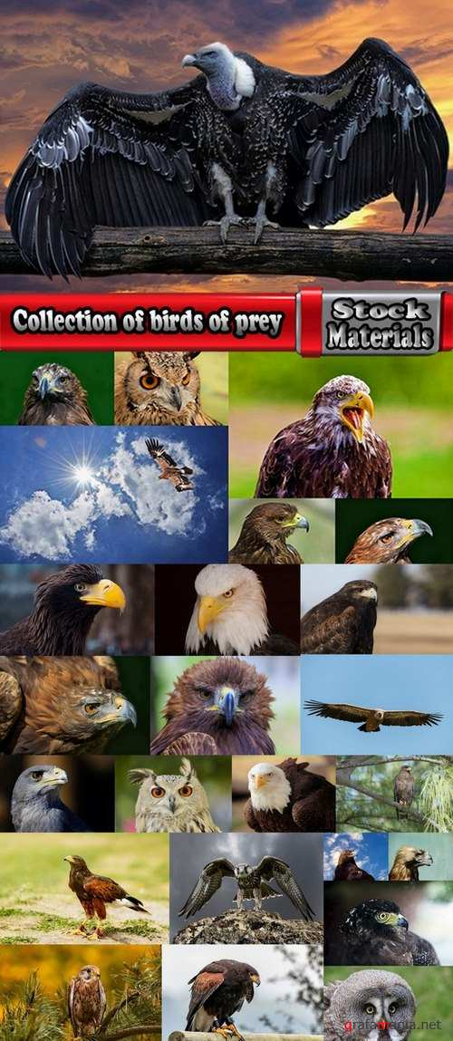 Collection of birds of prey 25 UHQ Jpeg