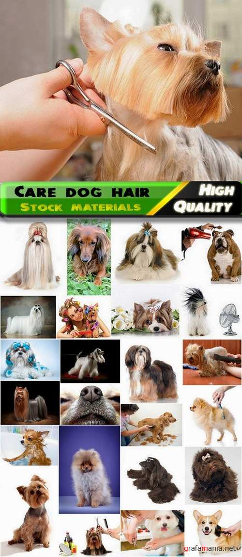 Care dog hair Stock images - 25 HQ Jpg