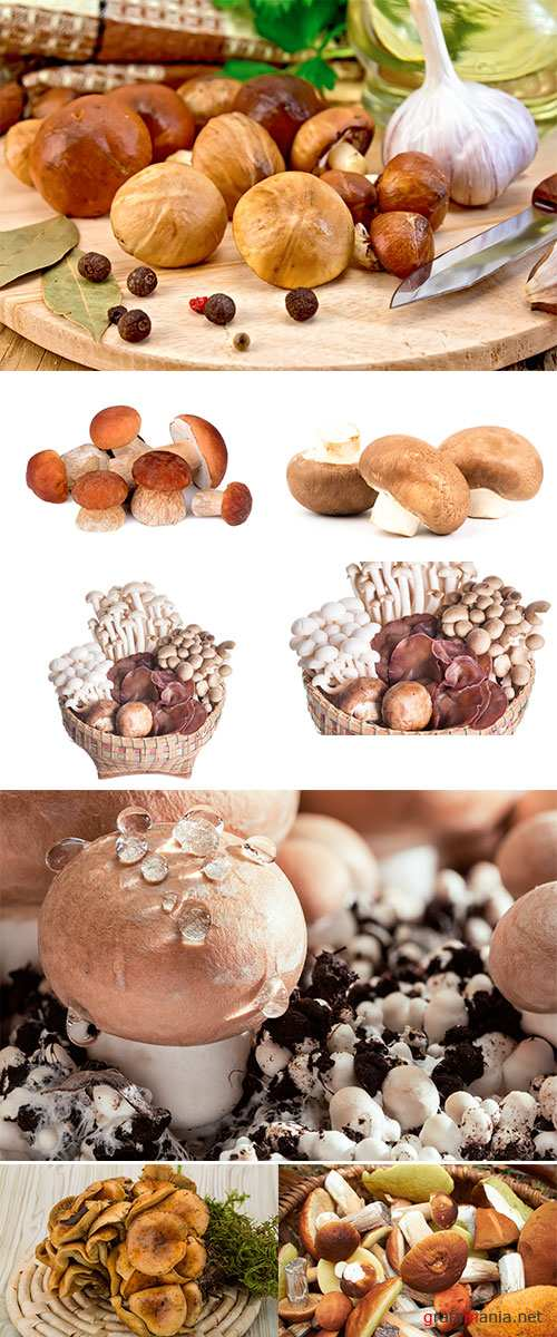 Stock Photo Variety of fresh mushrooms in wooden basket isolated on white background