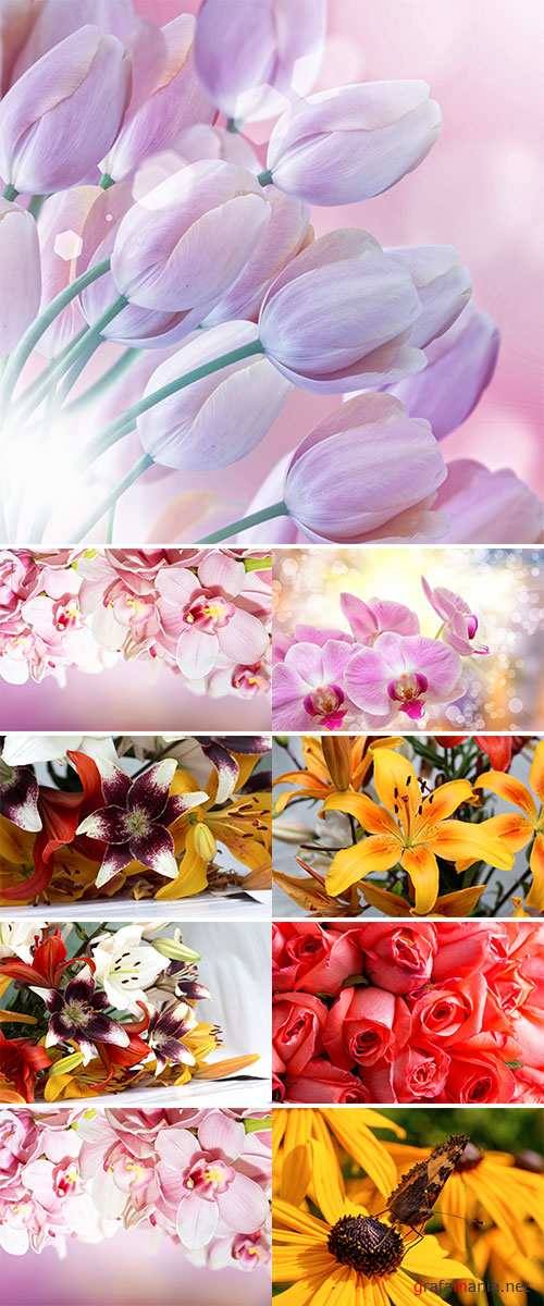 Stock Photo Spring flower background