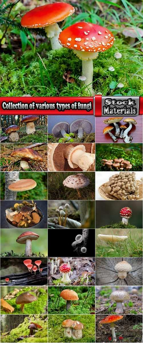 Collection of various types of fungi 25 UHQ Jpeg