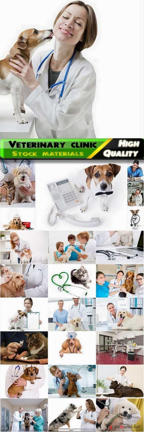 Veterinary clinic and treatment of pets Stock images - 25 HQ Jpg