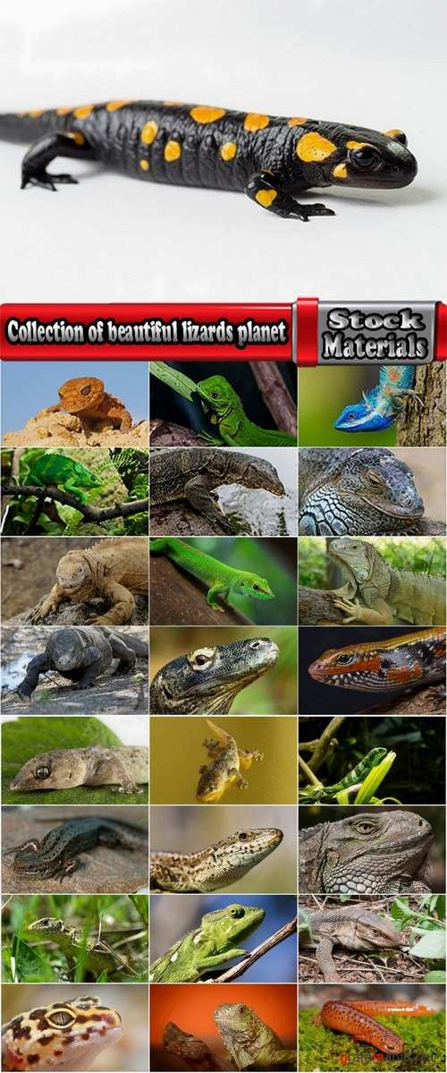 Collection of beautiful lizards planet 25 UHQ Jpeg