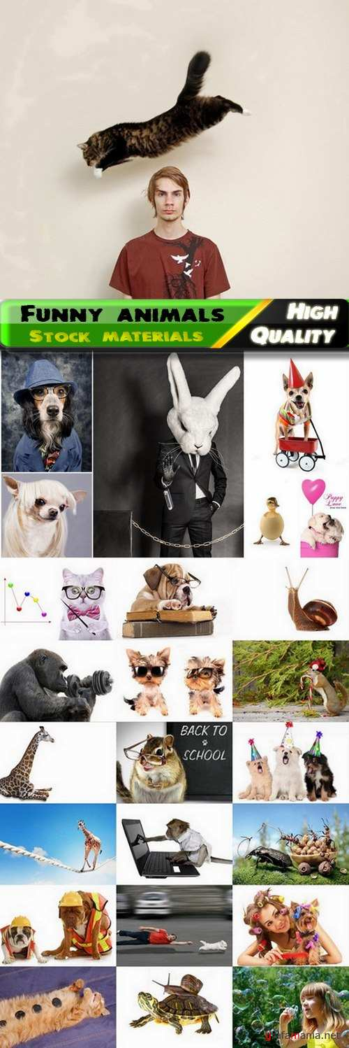 Funny wild animals and pets Stock images - 25 HQ Jpg