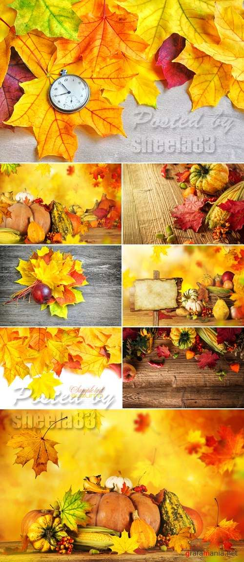 Stock Photo - Autumn 2015 Nature Backgrounds