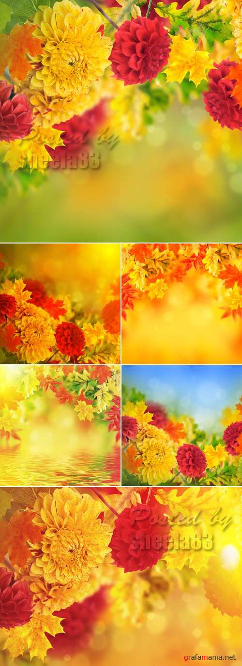 Stock Photo - Autumn Flowers Backgrounds
